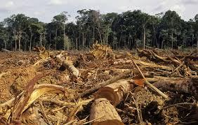Desmatamento cresce 32% nas Terras Indígenas da Amazônia brasileira, aponta ISA