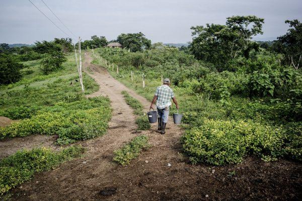 Apoio a agricultores familiares é fundamental na luta contra a fome, diz FAO