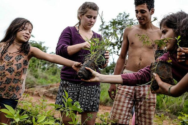 Indígenas se unem a voluntários para replantio de área desmatada pelo governo do DF