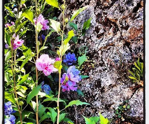 El jard n m gico ortigas y flores for El jardin magico