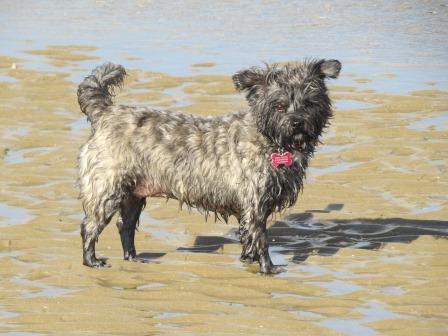 Sobre perros y pelos