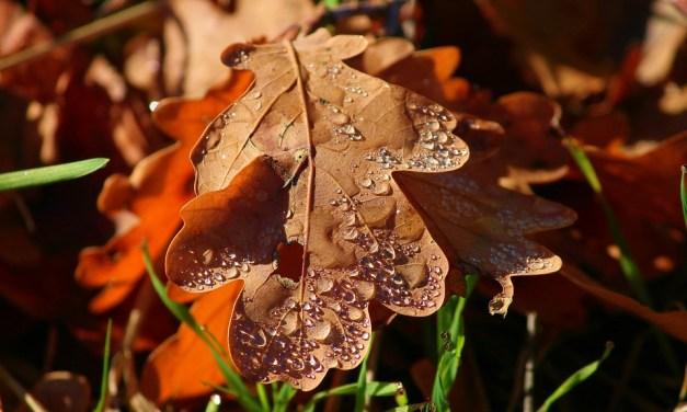 Lluvia de noviembre