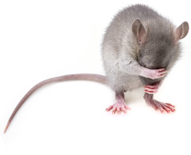 Aquellas Ratas