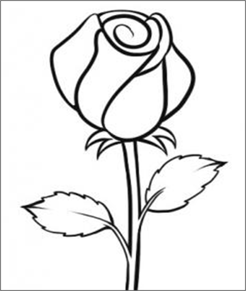 5 Langkah Menggambar Bunga Mawar dengan Cepat dan Mudah | Design