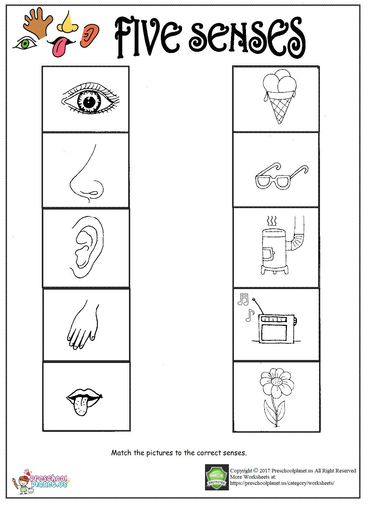 20 Five Senses Worksheets For Kindergarten
