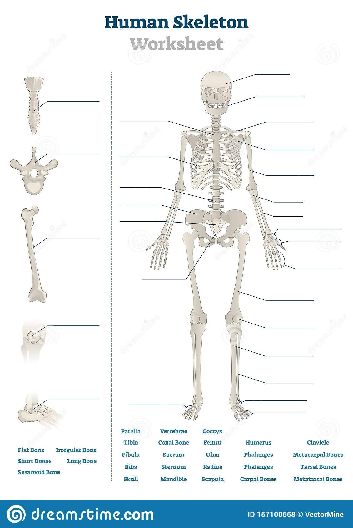 20 Free Printable Human Anatomy Worksheets