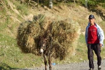 Un âne en habit camouflage