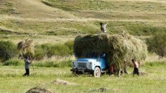 Le travail des champs se fait beaucoup à la main.