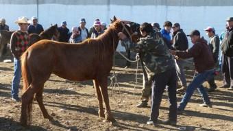 Ce cheval ne veut pas changer de proprietaire!