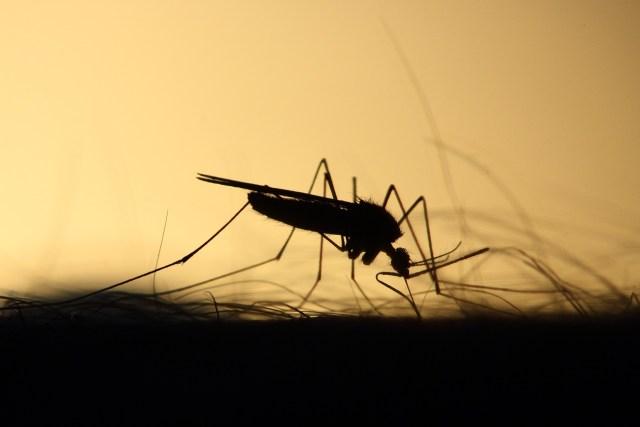 La eliminación de la malaria en Mesoamérica arranca identificando 183 focos activos