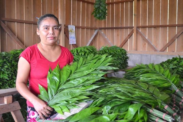 Comunidades de la Zona de Adyacencia Guatemala-Belice agregarán valor a productos agrícolas y se incorporarán a la cadena de exportación