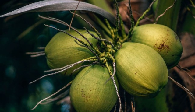 Cocos frescos, grasas y aceites de pescado, productos que sorprenden en abril 2020