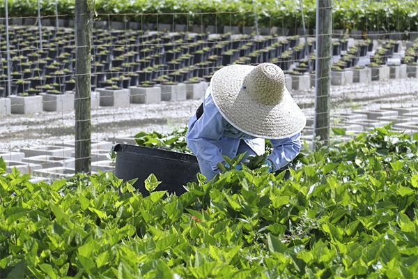 Sector Agrícola de Exportación apuesta por plataformas comerciales para la reactivación económica de productores y agroexportadores