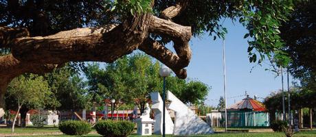 plazaalamadre2