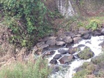Another view of the stream