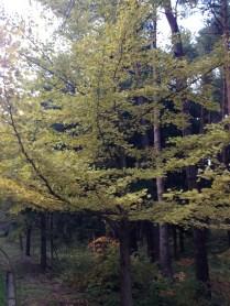 Lovely fall leaves