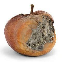 beschimmelde-appel