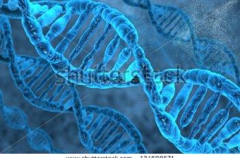 DNA – O que é?