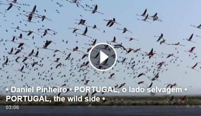 PORTUGAL, o lado selvagem
