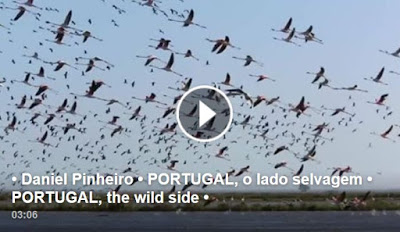 Portugal Selvagem