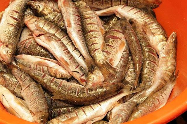 Peixinhos de rio