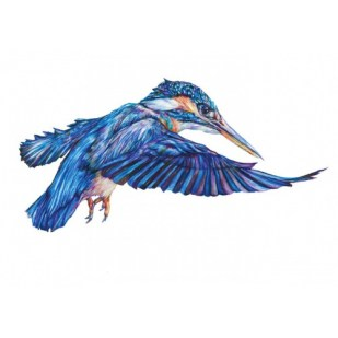 Claudine O'Sullivan - kingfisher