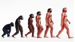 """^BHuman evolution. ^b Illustration showing stages in the evolution of humans. At left, ^Iproconsul^i (23-15 million years ago) is depicted hypothetically as an African ape with both primitive and advanced features. From it ^IAustralopithecus^i ^Iafarensis^i (>4- 2.5 Myr BP) evolved and displayed a bipedal, upright gait walking on two legs. ^IHomo^i ^Ihabilis^i (2.5 Myr BP) was truly human (""""homo"""") resembling ^IAustralopithecus^i but also used stone tools. About 1.5 Myr BP ^IHomo erectus^i (at centre) appeared in Africa, used fire, wooden tools, and migrated from Africa into Eurasia. ^IHomo^i ^Ineanderthalensis^i (200,000 years BP) lived in Europe and Middle East and was closely related to modern humans (right)."""