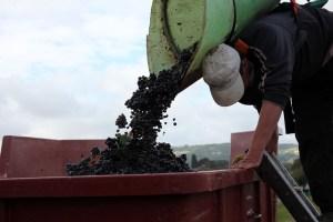 a grape picker 2408670 640 - a-grape-picker-2408670_640
