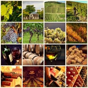 wine 1597376 - wine-1597376