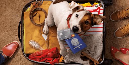 Viajar de avião com animais de estimação