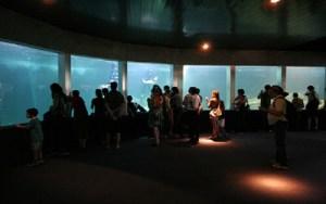 Acquamundo - o Aquário do Guarujá, maior da América do Sul