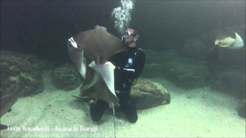 Mergulho com Tubaroes e Arraias no AcquaMundo Aquario do Guaruja