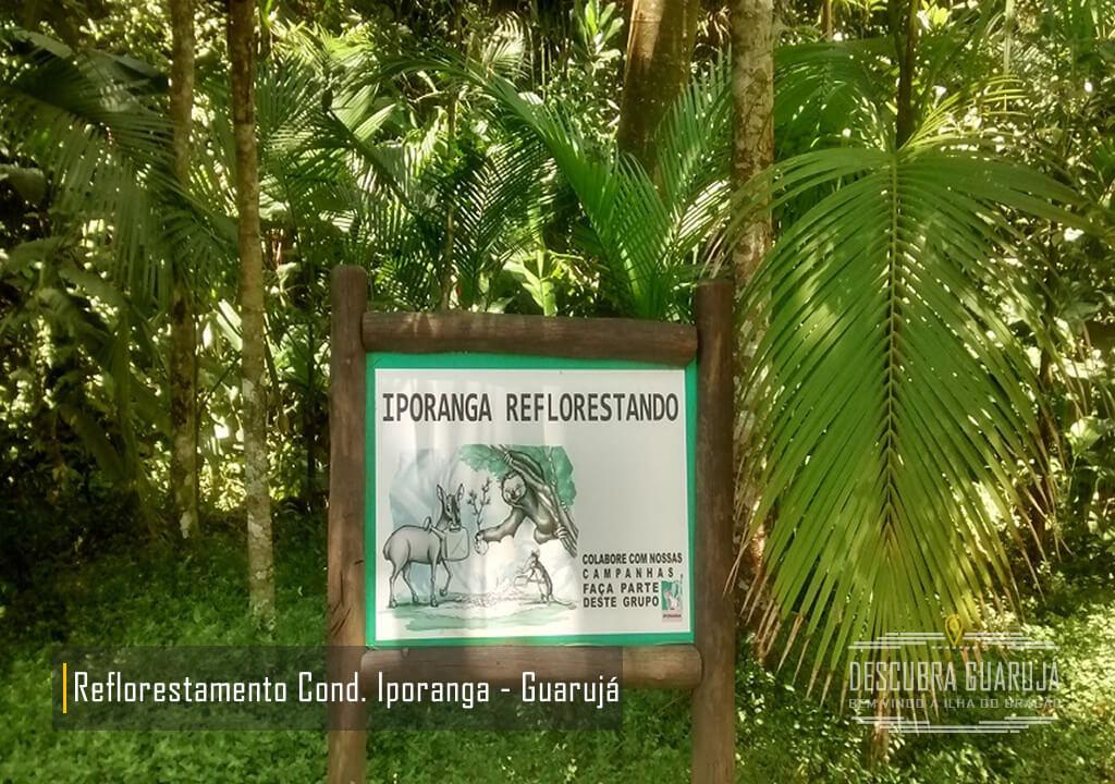 Reflorestamento Condominio Iporanga Guarujá