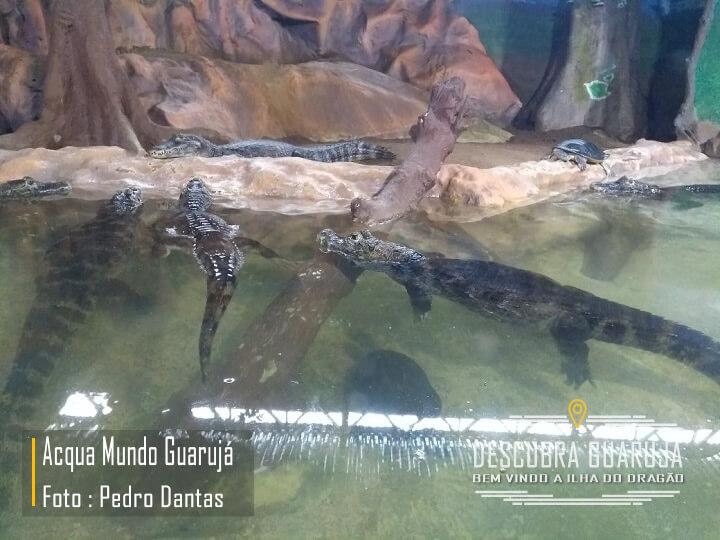 Jacarés no Acqua Mundo Aquário Guarujá - Foto Pedro Dantas