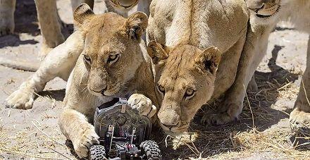 lionrobot - Desarrollo de un robot DIY fotógrafo para grabar leones
