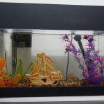 acuario-arduino-150x150 Radio por Internet y Google Play Music con #arduino y #raspberrypi