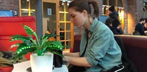 plantas interactivas - Alone together, unas plantas interactivas para hacerte compañía