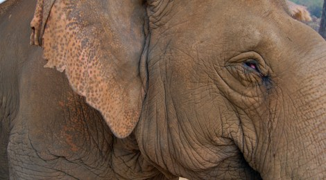 El elefante en Tailandia
