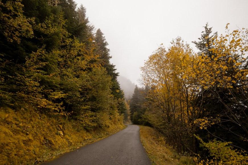 Carretera enter bosque en pleno otoño en la Val d'Aran