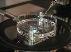 IVF Babies From Frozen Embryos 'Healthier And Heavier' Claim Experts