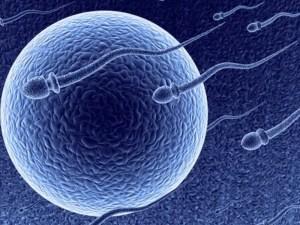 sperm-egg image