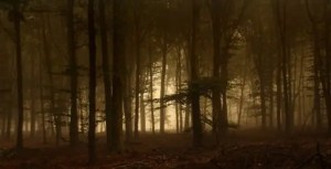 image of dark forest