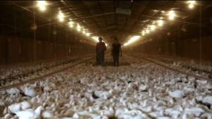 Chicken factory farmer speaks out