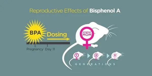 BPA effect on mice image