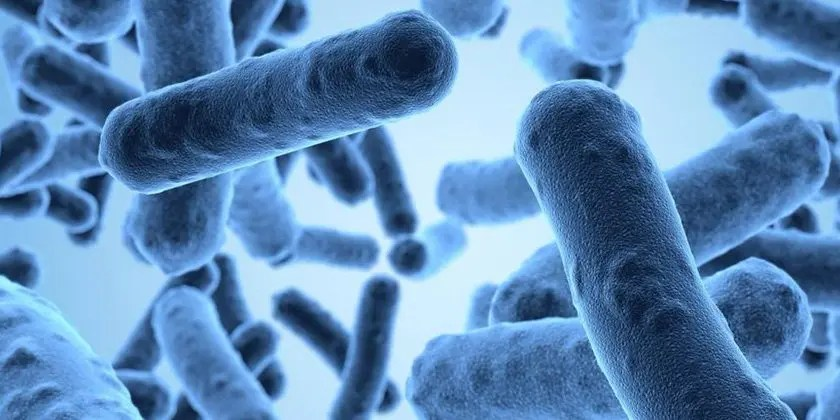 image of Antimicrobial-Resistance
