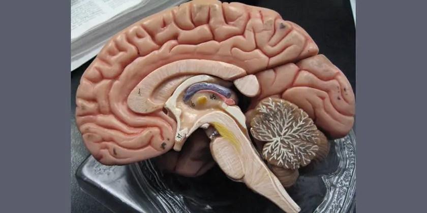 Urban air pollution: high levels of magnetite found in human brain tissues