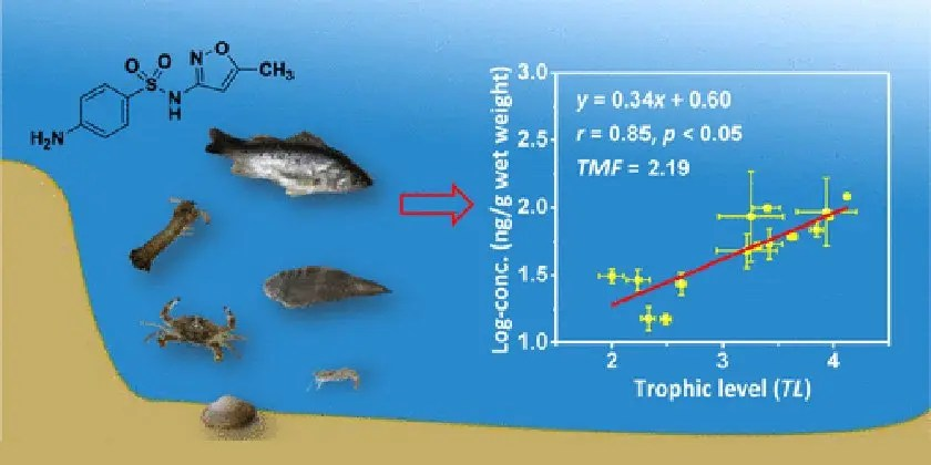Bioaccumulation of Antibiotic Pollution in Marine Food Webs