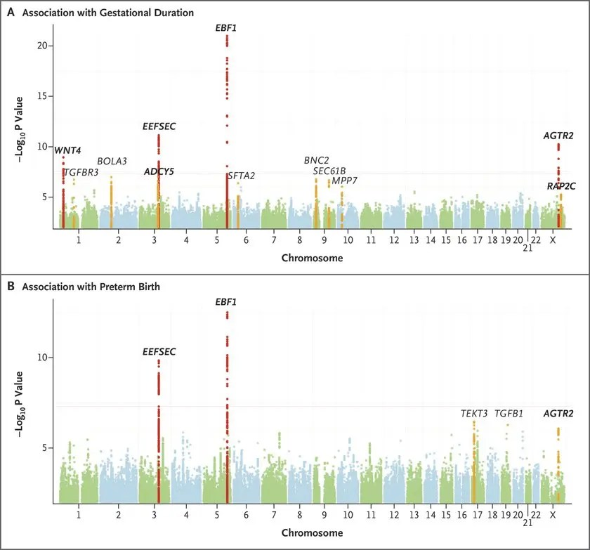 Genetic Associations with Gestational Duration and Spontaneous Preterm Birth