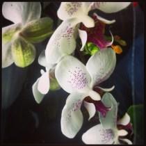 Imagen de una orquídea