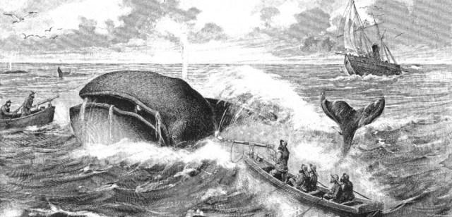 caza-ballenas-estados-unidos.jpg